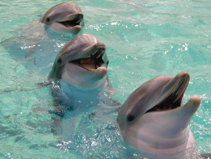 http://www.hitech-dolphin.com/image-files/smiling-dolphin-pictures-480.jpg